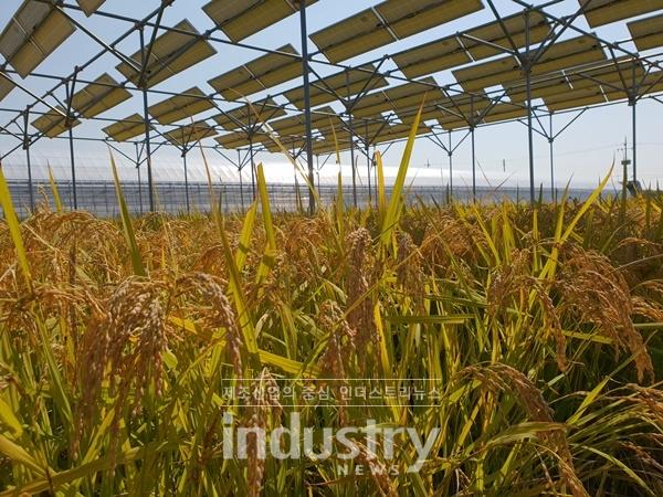 충북 청주 오창에 있는 한국최초 영농형태양광 발전소 [사진=한국영농형태양광협회]